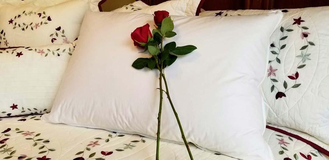 Down pillows – Buffalo Harmony House -T